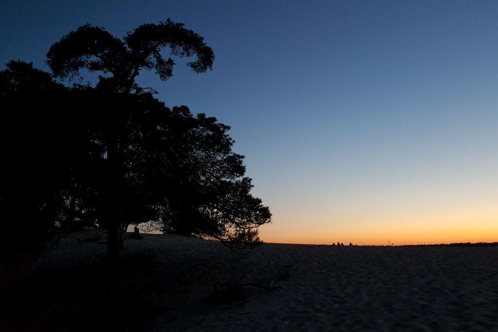 Nationalpark De Abends im Loonse en Drunense Dünen