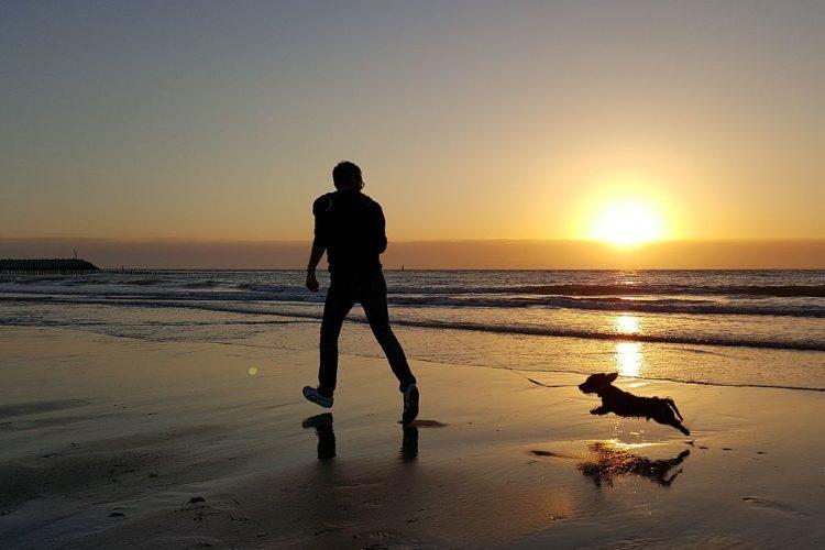 Cadzand Strand Hund Sonnenuntergang