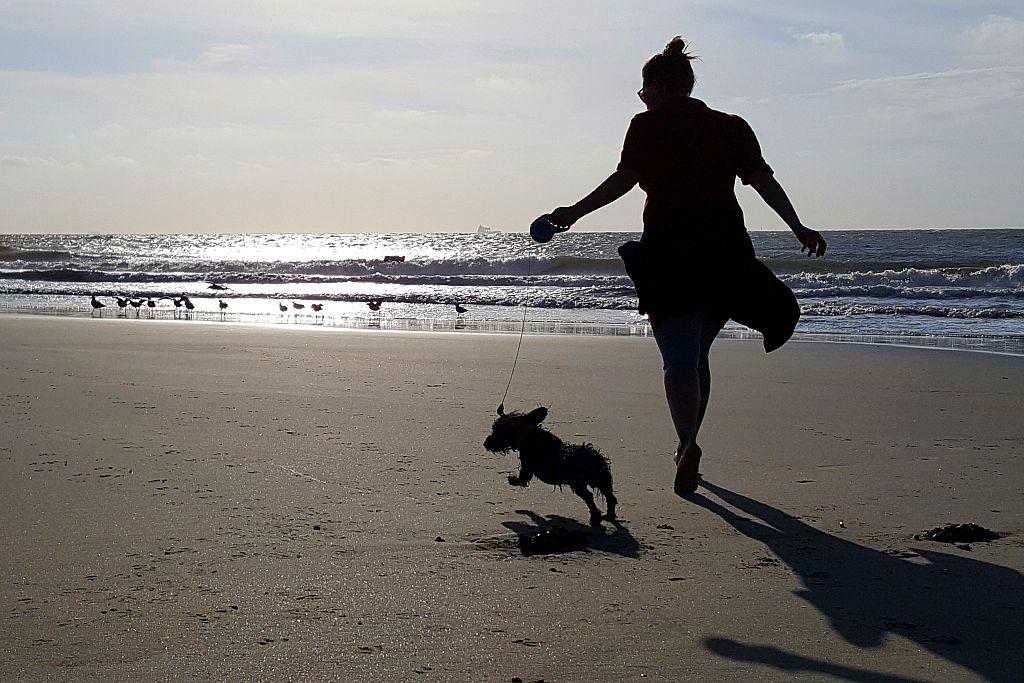 Cadzand Strand Hund