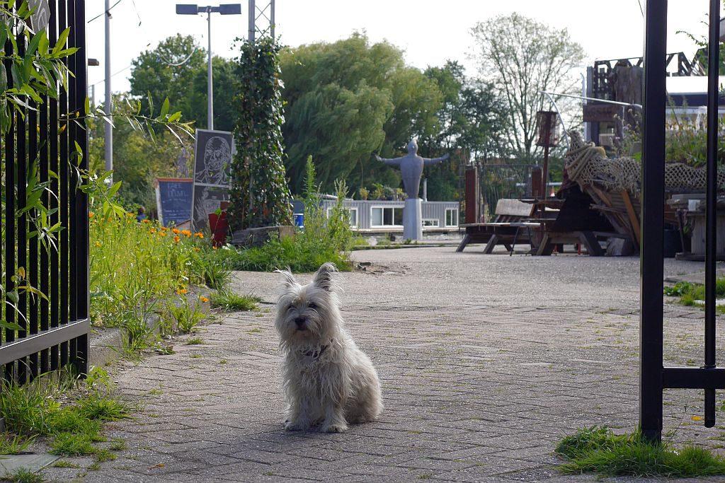 Cafe De Ceuvel Amsterdam Hund Eingang
