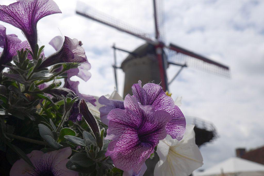 Sluis Blumen Windmühle