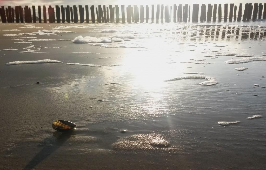 Bilder Nordsee Westkapelle Strand Gegenlicht