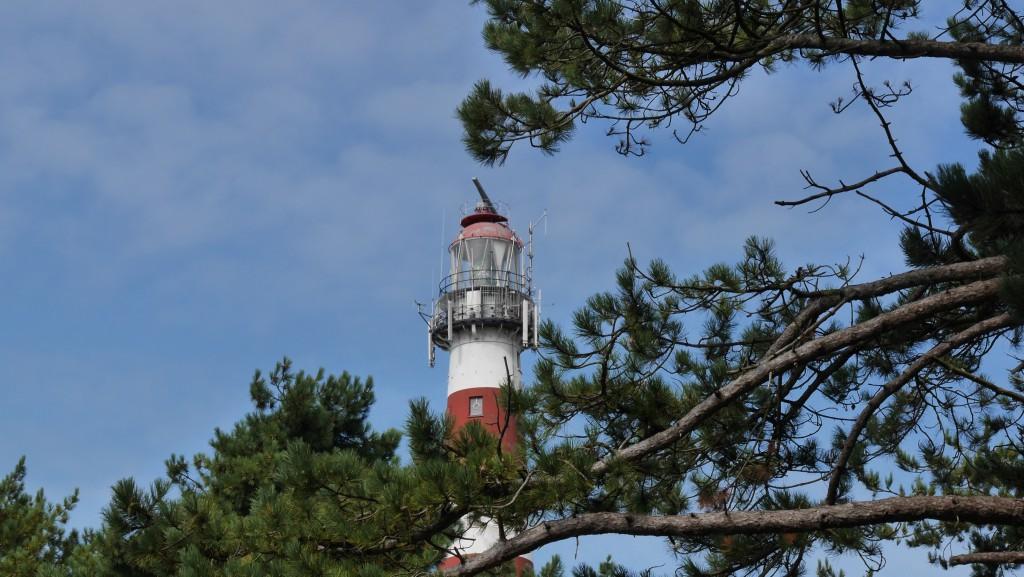 Foto Ameland: Leuchtturm Kiefer