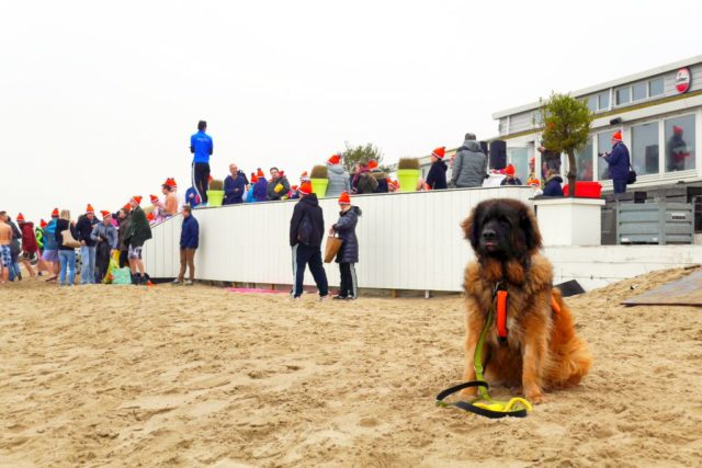 Rockanje Nieuwjaarsduik 2017 Rettungshund