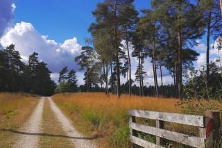 Heidelandschaft Nationalpark De Meinweg