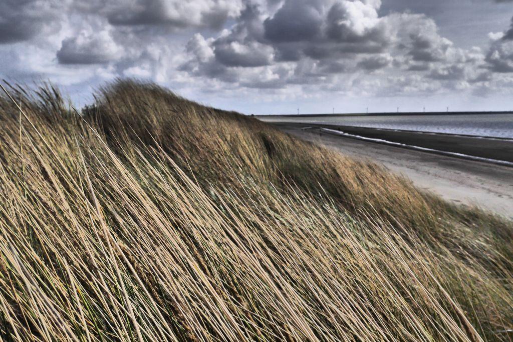 Rockanje Strand Südholland Dünengras