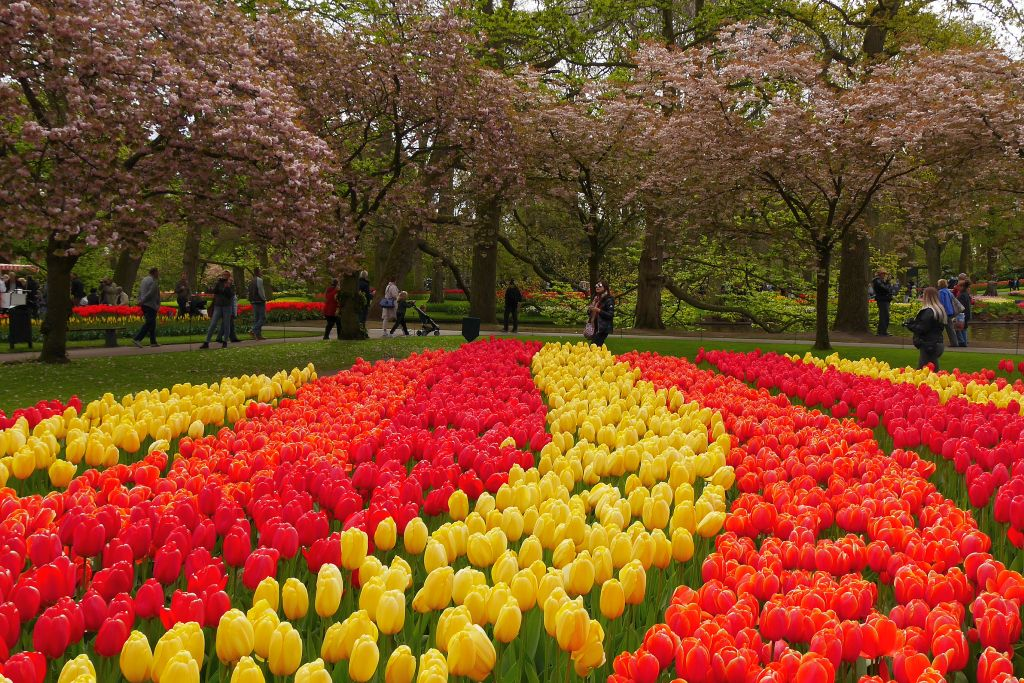 Keukenhof Tulpen rot gelb Besucher