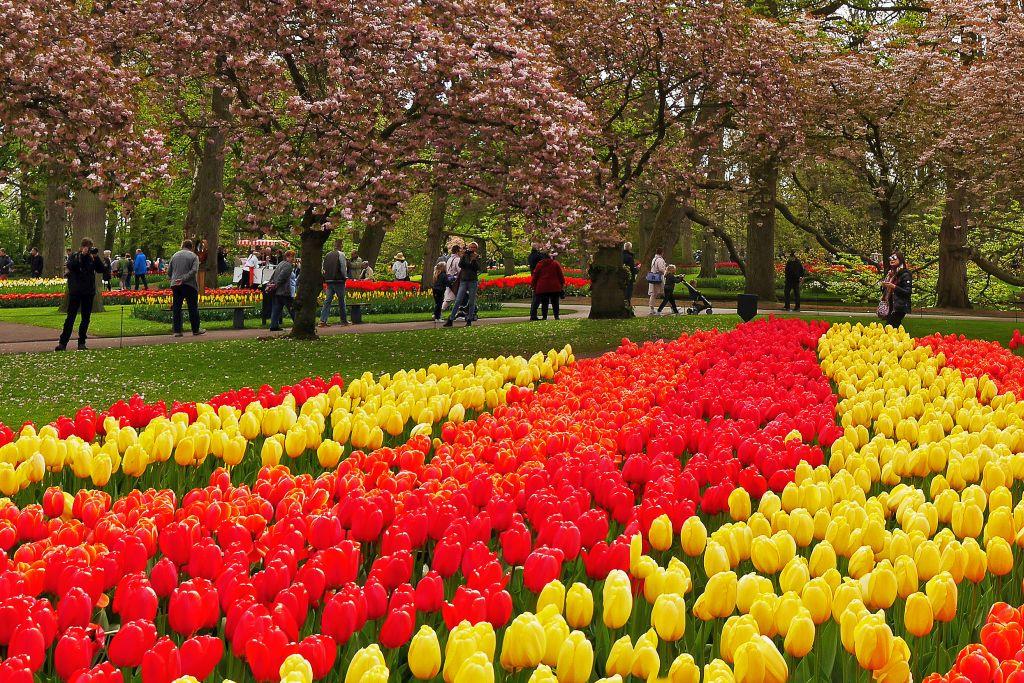 Keukenhof – farbensprühendes Blumenmeer aus Tulpen