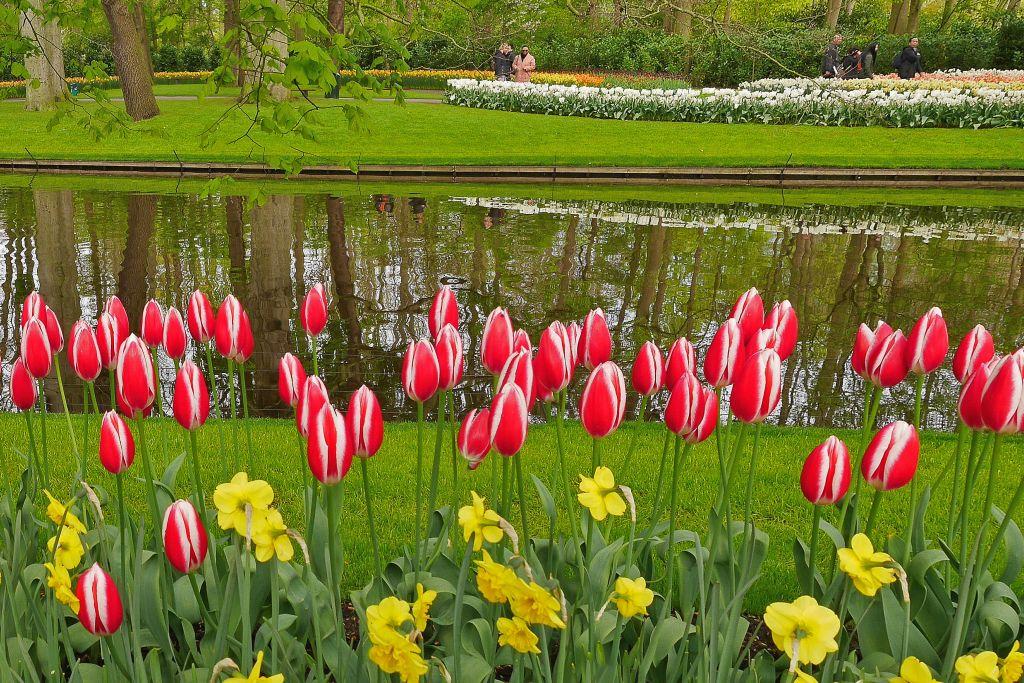 Keukenhof Tulpen am See