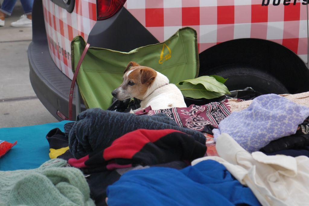 Flohmarkt IJHallen Amsterdam Hund