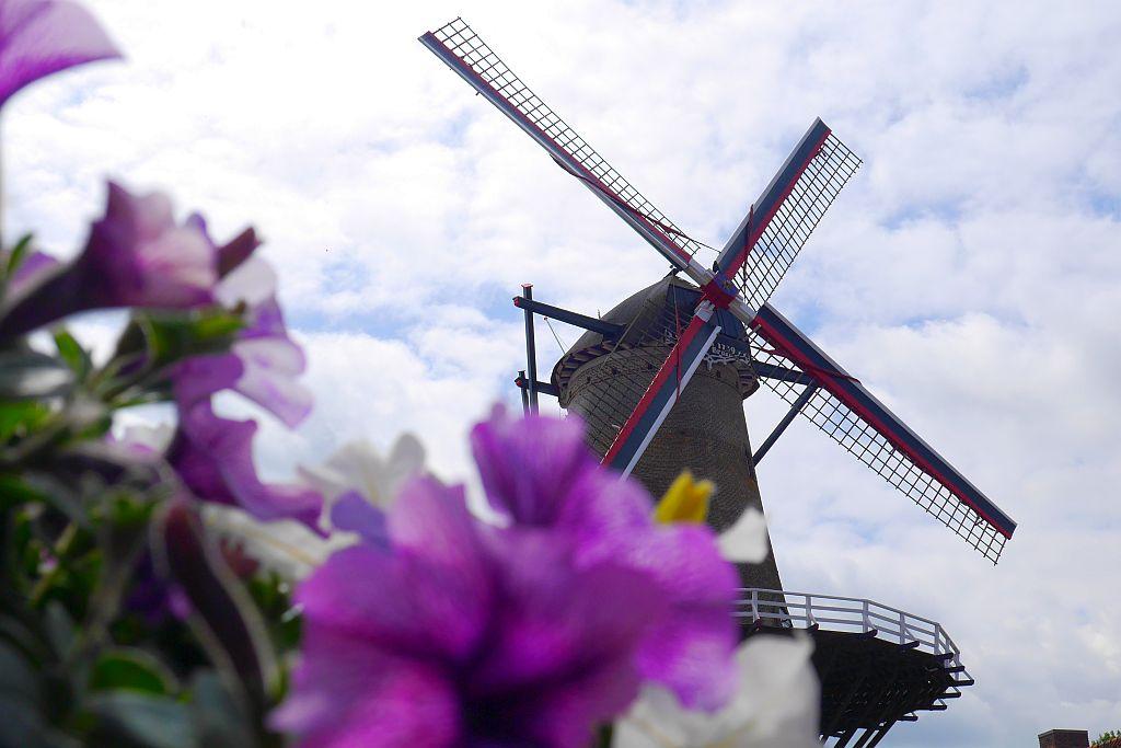 Windmühle Blumen Sluis