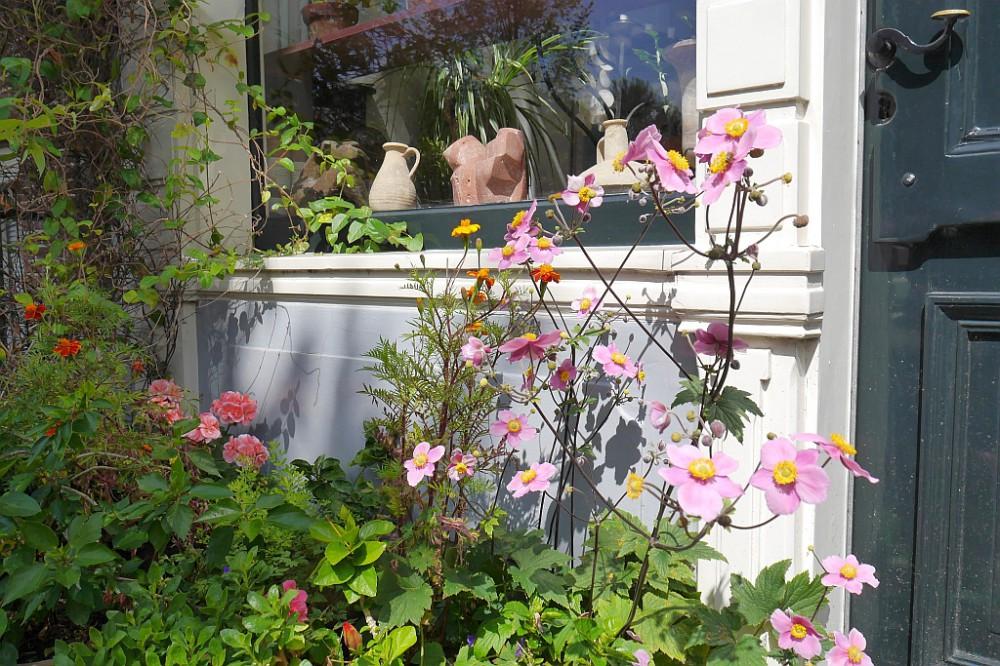 Blumen Fenster Spaziergang Amsterdam