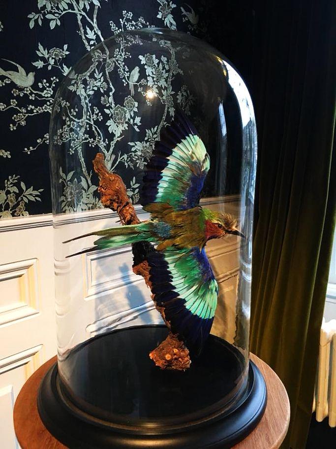 Villa Nicola Amsterdam Deko-Vogel in der Lobby