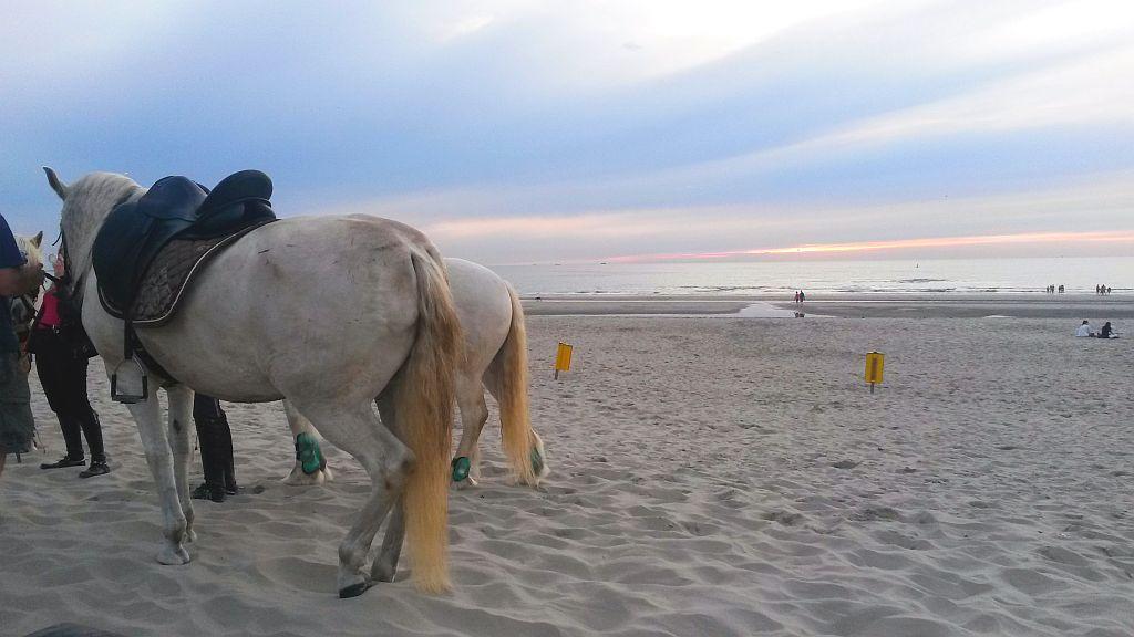 Strand Hoek van Holland Pferde