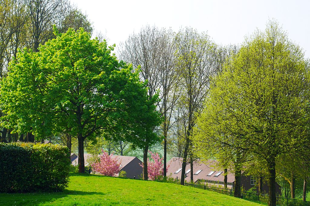 Kirschblüten Frühling Landal Hoog Vaals