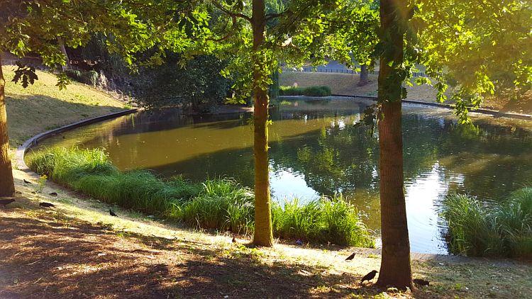 Nijmegen Kronenburgerpark Teich