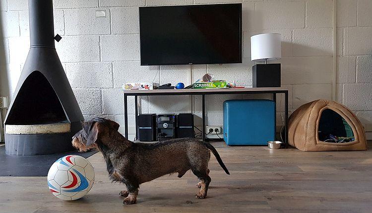Hund Landal Het Vennenbos