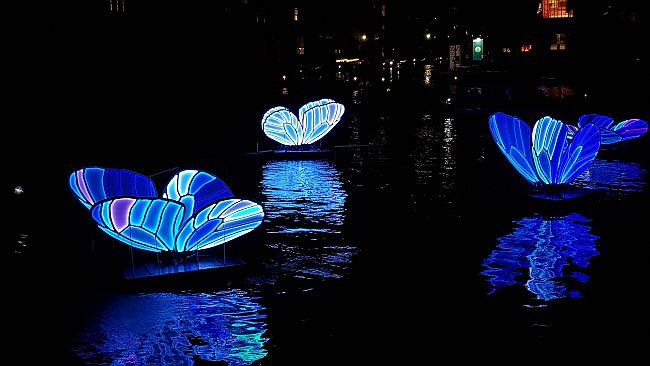 Blue butterflies Light Festival Amsterdam