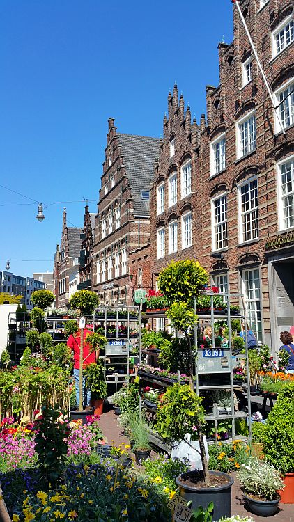 Den Bosch Markt Pflanzen kaufen
