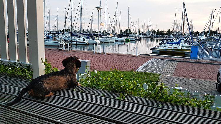 Ferienhaus Hund Cape Helius